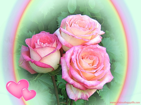 3 Lovely Pink Roses