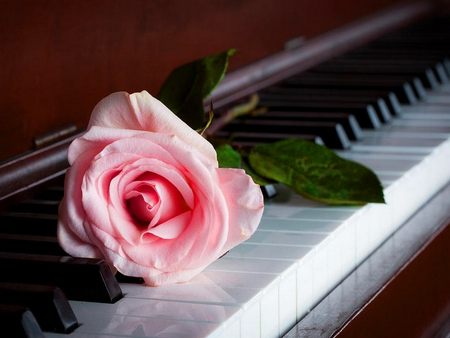 Music Flower Piano Keys Red Rose Wallpaper HD High Quality
