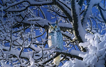 Blue Owl - owl, cold, trees, sky, white, snow, blue, winter