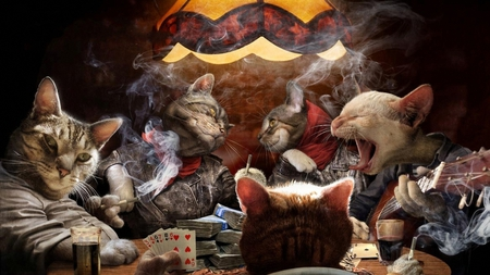 Feline Gangsta's - table, cards, guitar, funny, singing, money, smoking, gangsters, playing, drinks, cats, feline