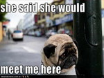 POOR JILTED PUG