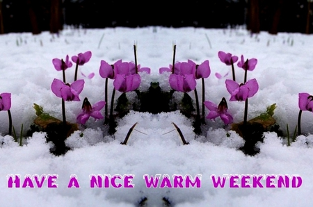 Image result for have a great weekend winter images