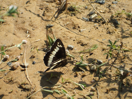 Sand Butterfly - butterfly, summer, nature, bug, sand