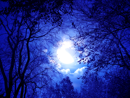 Moonlight Sonnet - scenery, dark night, beautiful, blue, view, beauty, night, dark, photo, moonlight, forest, trees, sky, sliver, leaves, photography, clouds, moon, nature