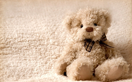 cuddle me - fluffy, teddy bear, toy, cute, ribbon, cuddle, cuddly, teddy