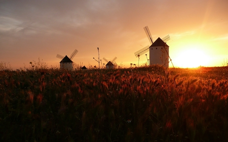 windmills at sunset - windmill, photography, nature, field