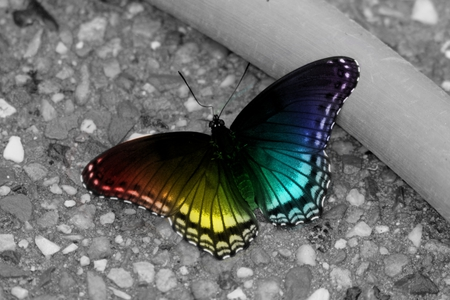 A rainbow colored butterfly - green, orange, blue, lovely, indigo, yellow, butterfly, purple, red