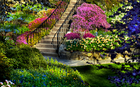 Beautiful Garden - handrail, splendor, flowers, garden, amazing, blue, rocks, pretty, butchart, steps, bank, colours, colourful, gardens, green, lawn, trees, blossom, heaven, colorful garden, peaceful, shrubs, spring, beautiful, way, tree, path, view, beauty, spring time, stairs, grass, mountains, stone, colorful, colors, colorful flowers, lovely, blue flowers, lawns, plants, nature, upwards, staircase