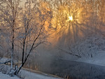 Sunshine through frosty trees..