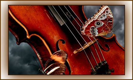 ღViolin Wingsღ - wings, angelic, bliss, strings, sonnets, romantic, emotions, melody, theater, butterflies, feelings, love, notes, violin, in love, sentimental, alluring, romance