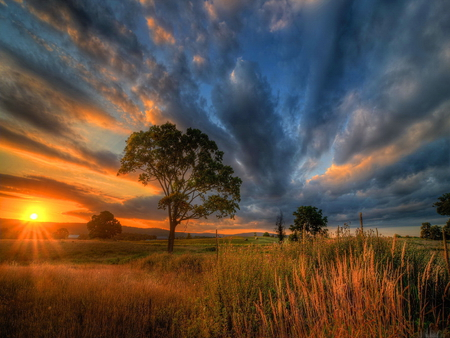 Velvet sky - sunshine, sunlight, sky, tree, sun, velvet, beautiful, clouds, field, lonely