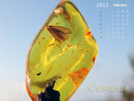 Baltic amber with inclusions