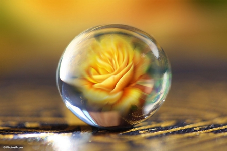 A yellow rose in a glass ball. - Flowers & Nature ...