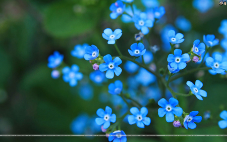 flowers make me feel good  flowers  nature background wallpapers, Beautiful flower