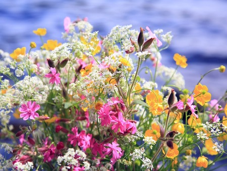 Summertime Flowers Photo - National Geographic Kids My Shot