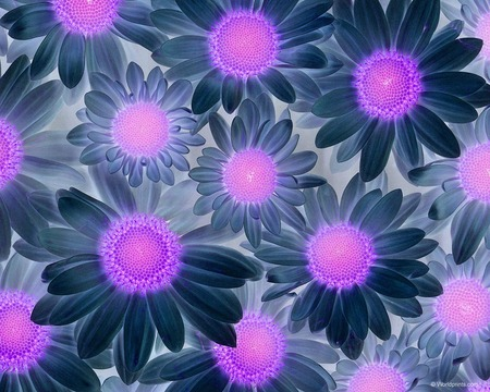 purple dream - cool, flowers, sparkle, pink, blue, beauty, interesting, purple, nice, texture, dream, fantsy