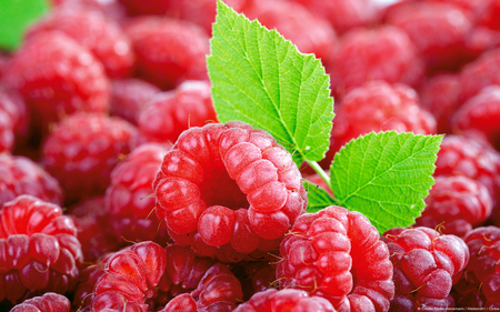 Raspberries - raspberries, food, nutrition, nature