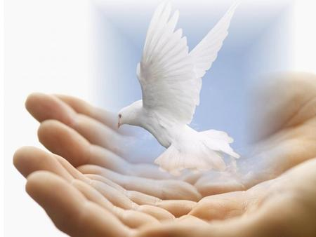 peace dove - dove, hands, bird, clouds, sky, peace, jesus, animal