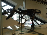 Day at The Royal Ontario Museum,TO,Ontario
