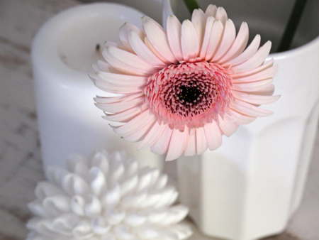 Once In A While... - candle, wonderful, gerbera, forever, bright, vase, light, flower, fashion, white, love, pale pink, entertainment