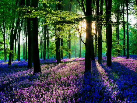 spring morning forests amp nature background wallpapers on