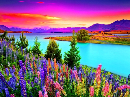 Flowers at sunset - flowers, sunrise, colorful, floral, river, sky, shore, colors, beach, water, lupin, clouds, sundown, sunset, nature