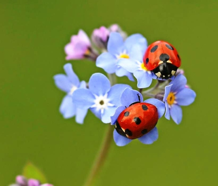 insects ladybirds desktop wallpapers - photo #42