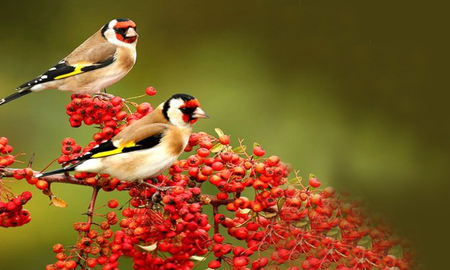 Comments on couple bird - Birds Wallpaper ID 999417 ...